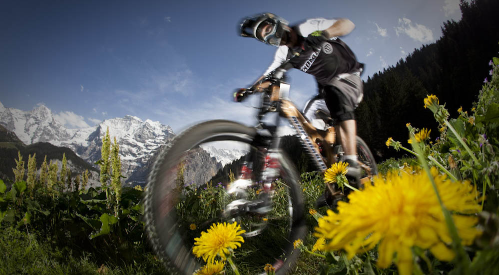 Mountainbiker riding downhill on flowerfield outside Lauterbrunnen, Switzerland